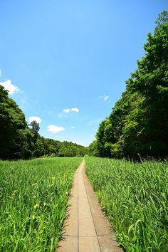 新緑の大町自然観察園(市川市大野町)Omachi   Nature Watching Park,Ichikawa city,Japan