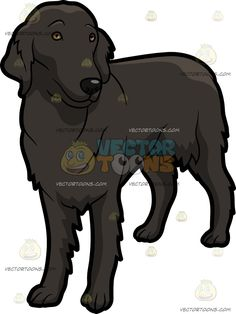 A Beautiful Flat Coated Retriever Dog :  A dog with black flat coat and droopy ears looking charming and adorable  The post A Beautiful Flat Coated Retriever Dog appeared first on VectorToons.com.   #clipart #vector #cartoon