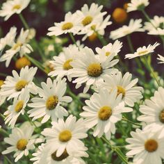 Daisy's are and always will be my favorite flowers :)