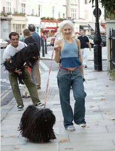 Gwen, Gavin, and two Puli dogs. Pet Dogs, Dogs And Puppies, Pets, Pumi Dog, Hungarian Puli, Komondor, Gwen Stefani Style, Herding Dogs, Dog Show