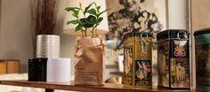 Is het drinken van een heerlijk kopje thee ook een heerlijk genietmomentje voor jou? Misschien ontspan je nog wel meer als je je eigen theeplant in huis hebt. Deze plant heet Camellia Sinensis en wordt gekweekt in een Hollandse theeplantage. Hij is verkrijgbaar bij bol.com onder het merk 'Tea by me'. Volgens de website van …