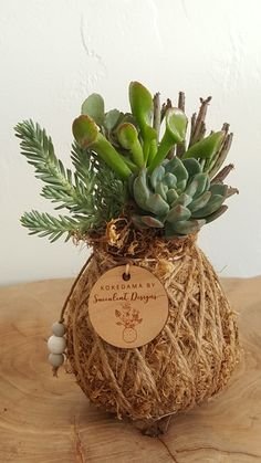 Mini succulent sedum Kokedama, in Clean Wrap twine, by SucculentDesigns on Etsy