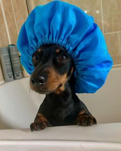 American Dog, Dog Language, Dachshund Dog, German Shepherd Dogs, Bath Time, Pet Treats, Animal Pictures, Dog Breeds, Dogs And Puppies