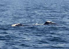 Whale off L.I.'s South Shore