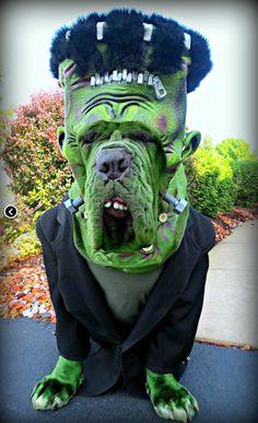 Dog Halloween Costume Frankenstein More Pet Accessories, Dog Toys, Cat Toys, Pet Tricks Puppy Costume, Diy Dog Costumes, Kids Costumes Boys, Diy Halloween Costumes For Kids, Fete Halloween, Funny Costumes, Halloween Desserts, Costume Halloween, Costume Ideas