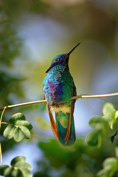 Love hummingbirds!  This one is gorgeous.
