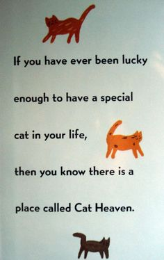If you have ever been lucky enough to have a special cat in your life, then you know there is a place called Cat Heaven. Crazy Cat Lady, Crazy Cats, Pet Loss Grief, Cat Heaven, Cat Quotes, Lovers Quotes, Here Kitty Kitty, Kitty Cats, All About Cats