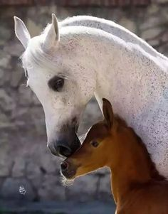 gorgeous Arabian horse and foal Baby Horses, Cute Horses, Horse Love, Wild Horses, All The Pretty Horses, Beautiful Horses, Animals Beautiful, Animals And Pets, Baby Animals
