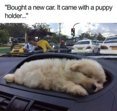 35 Funny Animal Memes That Are Totally Worth Looking At 35 animaux mignons qui valent totalement la peine de regarder Funny Animal Jokes, Funny Dog Memes, Cute Funny Animals, Animal Humor, Memes Humor, Humor Videos, Humor Quotes, Animal Quotes, Funny Quotes