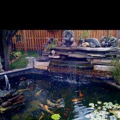 Backyard koi pond