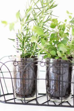 DIY Kräutergarten Für Die Küche Im Mason Jar