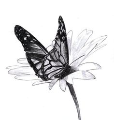 10  Beautiful Butterfly Drawings for Inspiration, http://hative.com/butterfly-pencil-drawings/,: