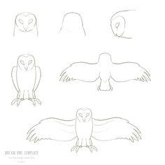 The Owl Fantasy Forum :: View topic - Aorkai Owls