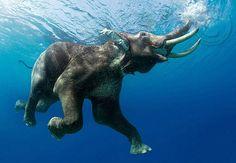 Maravillosas criaturas...