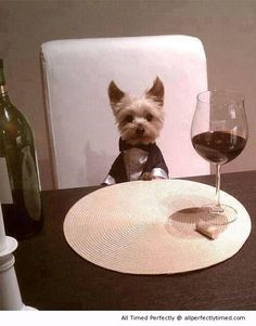Will you join him for dinner? – A romantic dinner with your best friend at home.