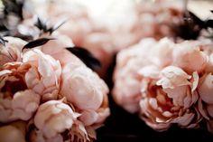 Un libro, una rosa | Click & Spotted!