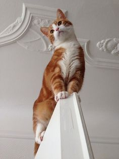 """I is a majestic cat and will pose majestically, but can't get down at the moment"" ("""") ("""")"
