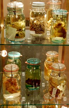 Cabinet of Curiosities:  Wet Specimens