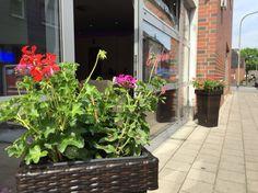 Neue Blumen im Top :-) danke an #regioengel Blumen Fragen fürs spontane Einpflanzen! Wir freuen uns auf Euren Besuch in unserem Sonnenstudio Sun Sky in Korschenbroich Glehn. http://www.sonnenstudio-sun-sky.de