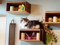 2015-11-16 - Spokesman-Review - Customer catisfaction - Understanding feline temperaments key to creating cat-friendly home