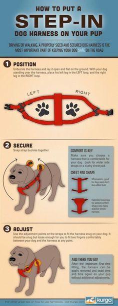 ... para perros on Pinterest  