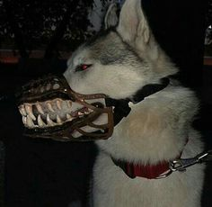 Werewolf Muzzle For Dogs, Turns Man's Best Friend Into The Scariest Supernatural Beast Scary Dogs, Dog Muzzle, Hip Hop, She Wolf, Enfj, Anime, Looks Cool, Mans Best Friend, Werewolf