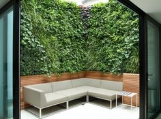 Examples of Biotecture's living walls designed for courtyard gardens and lightwells, private and commercial.