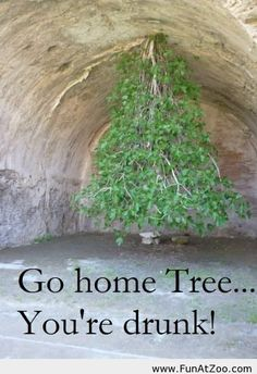 Go home tree youre drunk Funny picture