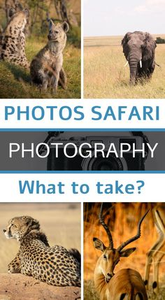If you are planning a safari, you are most certainly a nature, animal and especially photography enthusiast. In this article, I give you my best tips for choosing your camera equipment. I will talk about the choice of the body, the lenses, the accessories according to your desires, budget and skill in photography #photography #advicephotography #cameragear #photographytips