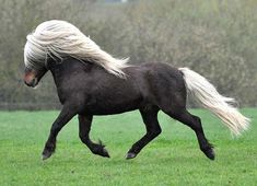 Love his mane and forelock!