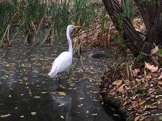 Birds of Mason Regional Park