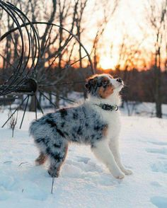 Super Cute Puppies, Cute Baby Dogs, Cute Little Puppies, Cute Dogs And Puppies, Cute Baby Animals, Funny Animals, Doggies, Funny Dogs, Cutest Dogs
