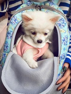 I found this amazing 10 Colors Breathable Pet Travel Backpack Dog Cat Outdoor Activity Travel Carrier Bag with US$33.99,and 14 days return or refund guarantee protect to us. --Newchic Pet Travel, Travel Backpack, Funny Talking Dog Videos, Dog Quotes Love, Dog Jokes, Cute Funny Dogs, Make Money Now, Dog Hacks, Baby Dogs