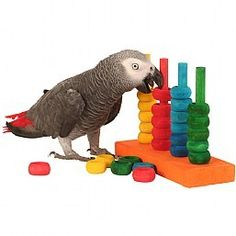 Teacher training parrot toy - african grey, amazon, cockatoo, senegal, conure et   eBay