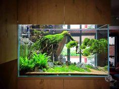 Beautiful tank ------------------------------------------------ #aquascape #aquarium #aqua #aquascaping #wood #grass #tetra #fish #fishtank #tropical #tropicalfish #iwagumi #scenery #water #fresh #aquariumsofinstagram #aquaria #beautiful #awesome #plants #aquariums #instafish #naturalaquariums #beautiful #aquariumsdaily #design #ADA