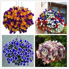 BUY now 4 XMAS n NY! hanging petunia seeds melissa original flower seeds perennial flowers for home garden bonsai pot planting petunia * Detailed information can be found on AliExpress website by clicking on the image Hanging Plants Outdoor, Hanging Flowers, Hanging Planters, Hanging Baskets, Fall Planters, Patio Plants, Diy Hanging, House Plants, Flower Seeds