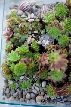 succulent garden as coffee table flower
