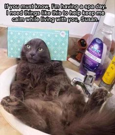 """These """"Top 28 Cat Memes Hilarious"""" are collected especially for cat lovers.If you are love cats then you are at right place at right time.Just read of these """"Top 28 Cat Memes Hilarious"""" and keep enjoy. Funny Animal Memes, Funny Cat Videos, Cute Funny Animals, Funny Animal Pictures, Funny Memes, Animal Captions, Funny Pictures Hilarious, Funny Stuff, Funny Meme Pictures"""
