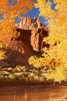 The Castle, Capitol Reef National Park, Utah by Ron Niebrugge