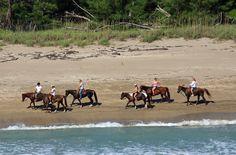 Beach Tours on Horseback  North Hutchinson Island, Florida
