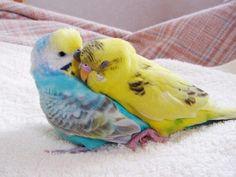 448 x 336 Pixel - Funny Birds, Cute Birds, Pretty Birds, Beautiful Birds, Cute Little Animals, Cute Funny Animals, Funny Animal Pictures, Cute Ducklings, Funny Parrots
