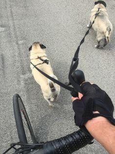 Pug Power Assist Pugs, Pug Dogs, Pug, Pug Life