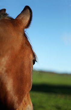 Horse #2 by Ben Simpson  2000x1300mm