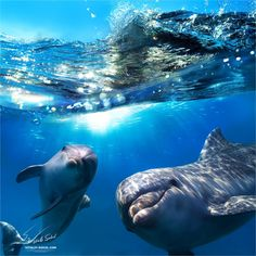Two funny dolphins smiling underwater. Two dolphins underwater and breaking spla , Orcas, Beautiful Creatures, Animals Beautiful, Happy Animals, Cute Animals, Funny Dolphin, Share Pictures, Amazing Pictures, Pisces