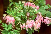 Encyclopédie des fleurs | Flower.fr