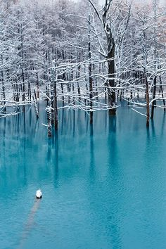 Biei, Hokkaido, Japan. Blue Pond in November by Kent Shiraishi, via 500px