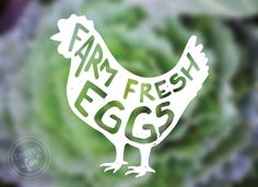 Bill White Farms in Park City Utah - Branding and Logo Design by Dapper Fox Design - farm fresh eggs design