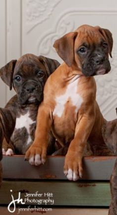 Top 10 Dog Breeds, love these boxers :)