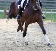 Improving Leg Yields for Your Horse