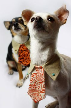 doggie couture.  dog colar shirt and tie, perfect dog clothes for the refined pup.  from jalinacolon on etsy.  she makes lots of cute doggie things.  :) #dogsinclothes #dogs #pets... Glo, you could totally make these!